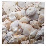 Fondo de Shell del mar de la Florida - la playa de Teja Ceramica