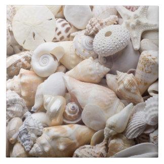 Fondo de Shell del mar de la Florida - la playa de Azulejo Cuadrado Grande