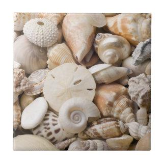 Fondo de Shell del mar de la Florida - la playa de Azulejo Cuadrado Pequeño