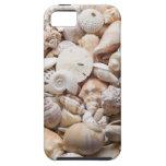Fondo de Shell del mar de la Florida - la playa de iPhone 5 Case-Mate Cobertura