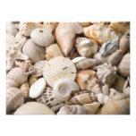 Fondo de Shell del mar de la Florida - la playa de Impresiones Fotográficas