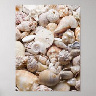 Fondo de Shell del mar de la Florida - la playa de Póster