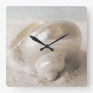 Fondo de Shell del mar de la Florida - la playa de Reloj