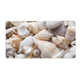Fondo de Shell del mar de la Florida - la playa Etiqueta De Envío