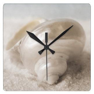 Fondo de Shell del mar de la Florida - la playa Reloj Cuadrado