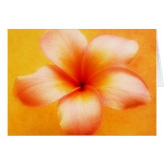 Fondo del naranja de la flor del Plumeria del Tarjeta Pequeña