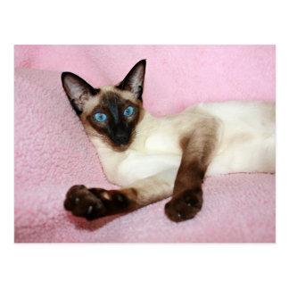 Fondo del rosa del gato siamés postales