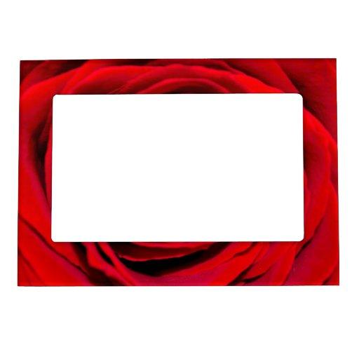 Fondo del rosa rojo foto de imanes