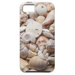 Fondo del Seashell - modificado para requisitos pa iPhone 5 Case-Mate Carcasas
