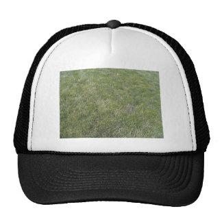 Fondo fresco de la hierba verde gorros bordados