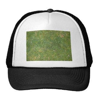Fondo mezclado hermoso de la hierba gorra