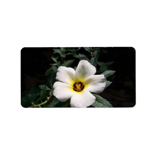 Fondo oscuro de centro rojo de la flor blanca del  etiqueta de dirección