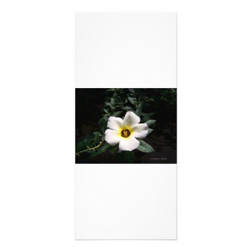 Fondo oscuro de centro rojo de la flor blanca del  lonas publicitarias