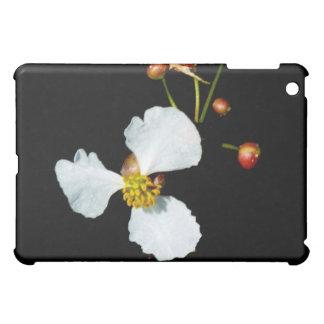 Fondo petaled del negro de la flor blanca tres