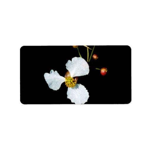Fondo petaled del negro de la flor blanca tres etiqueta de dirección