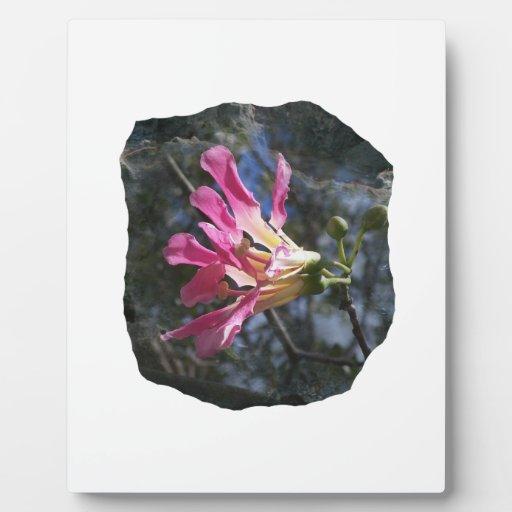 Fondo púrpura de la roca del cielo del árbol n de  placas con fotos