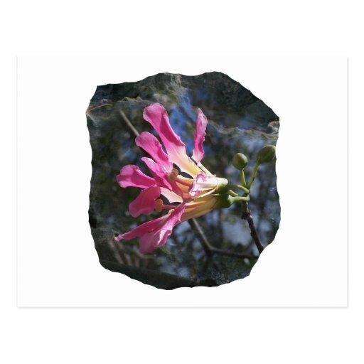 Fondo púrpura de la roca del cielo del árbol n de  postales