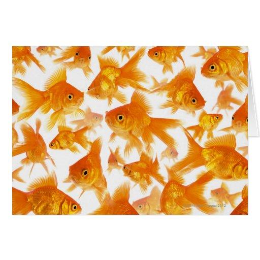 Fondo que muestra un grupo grande de Goldfish Tarjeta De Felicitación