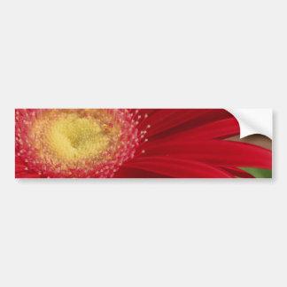 Fondo rojo de la flor de la margarita de Gerber Etiqueta De Parachoque