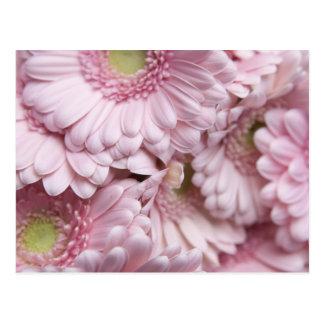 Fondo rosado de la flor tarjetas postales