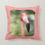 Fondo rosado del verde de la fotografía de la cabe cojines