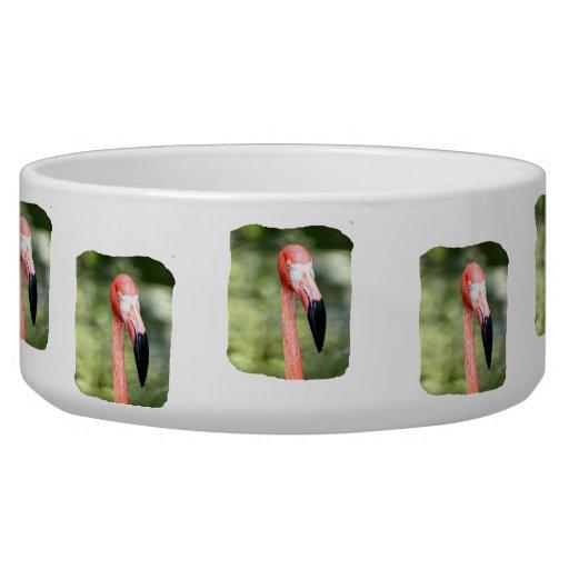 Fondo rosado del verde de la fotografía de la cabe bol para perro