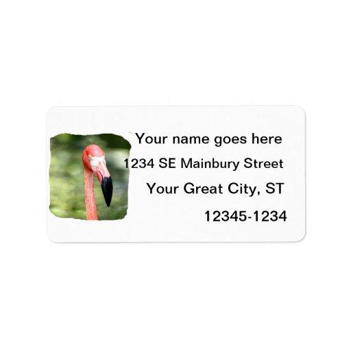 Fondo rosado del verde de la fotografía de la cabe etiquetas de dirección