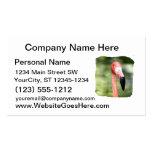 Fondo rosado del verde de la fotografía de la cabe tarjeta de visita