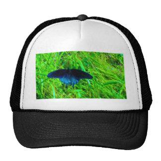 fondo verde claro de la mariposa azul de neón gorro