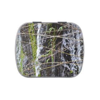 fondo verde de la planta de las ramitas del musgo  latas de caramelos