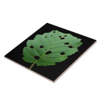 Fondo verde del negro de la hoja tejas  cerámicas