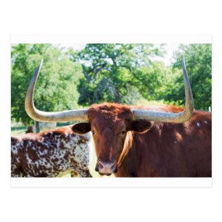 Fonolocalizador de bocinas grandes magnífico Bull Tarjeta Postal