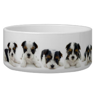 Food Bowl - Biewer Terrier Puppy