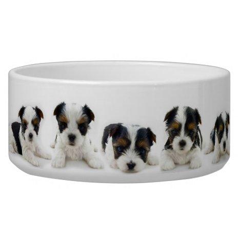 Food Bowl - Biewer Terrier Puppy