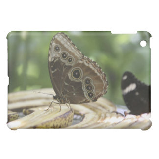 Food for Butterflies Case For The iPad Mini