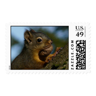 Food Hoarding Squirrel! Postage Stamps
