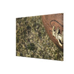 Football season gallery wrapped canvas