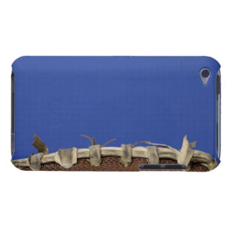 Football time iPod touch case