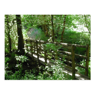 Footbridge in Woodland. Post Card