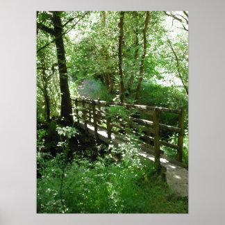 Footbridge in Woodland. Print