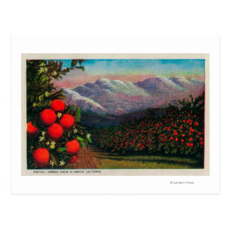 Foothill Orange Grove in the WinterState Postcard