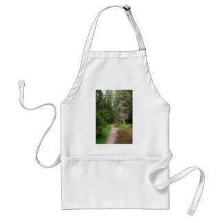 footpath on forest adult apron