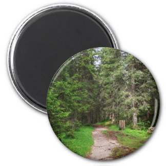 footpath on forest 2 inch round magnet