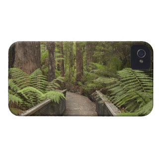 Footpath Through Forest to Newdegate Cave, iPhone 4 Case-Mate Case