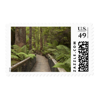 Footpath Through Forest to Newdegate Cave Stamps
