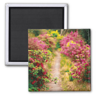 Footpath with azaleas 2 inch square magnet