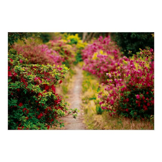 Footpath with azaleas poster