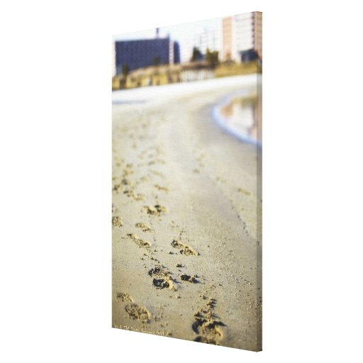 Footprint in coast. gallery wrap canvas