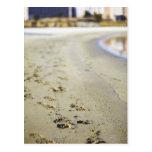 Footprint in coast. post card