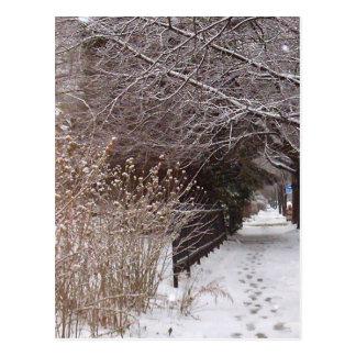 Footprints in the snow. postcard